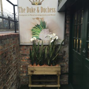 The Duke and Duchess - The Studio